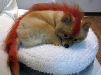Cucciolo Firefox