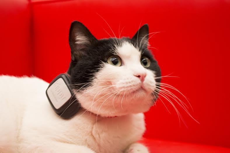 cellulare-gatto-vodafone
